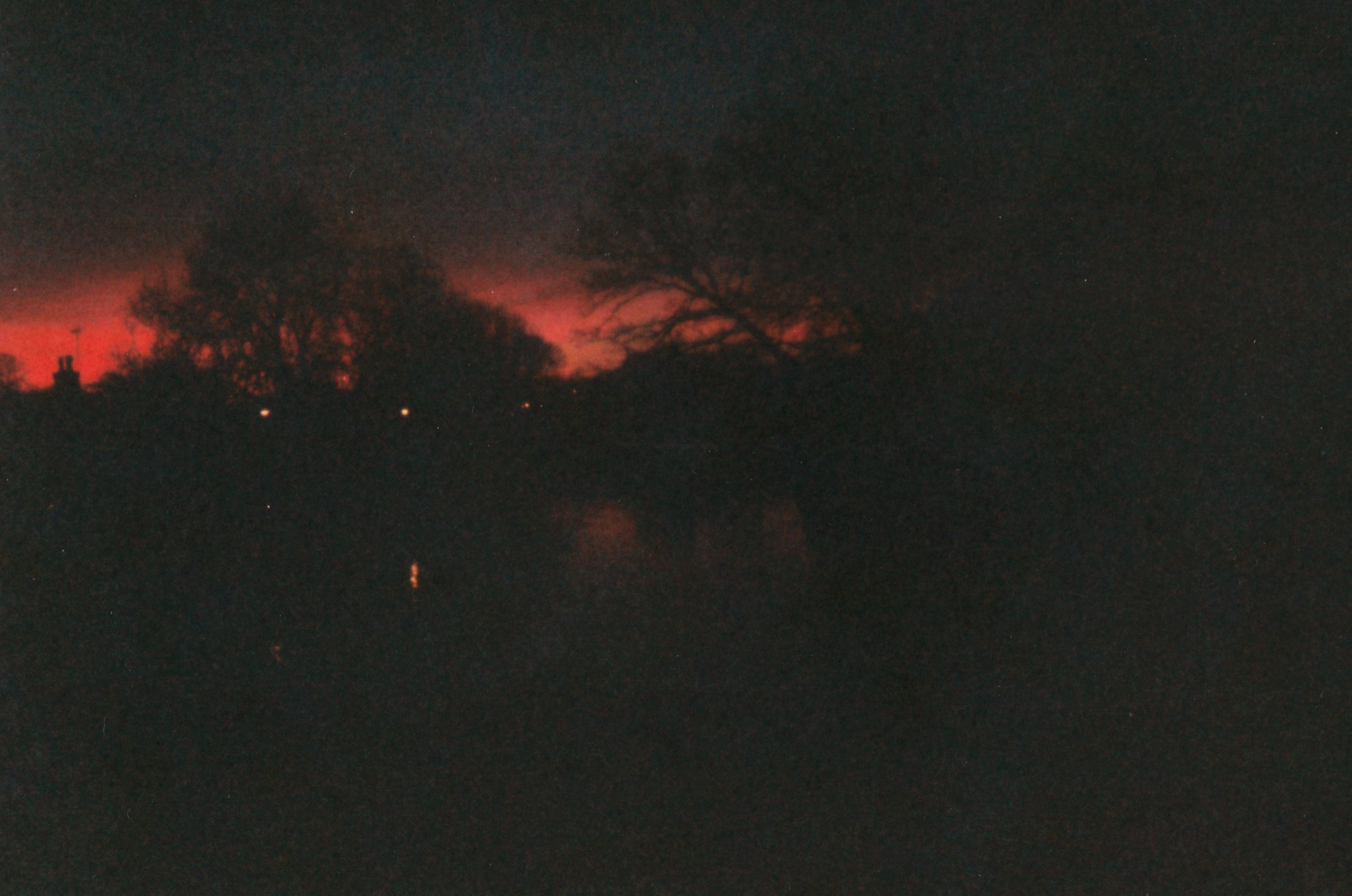 A photo of trees, very dark, with a red sky background