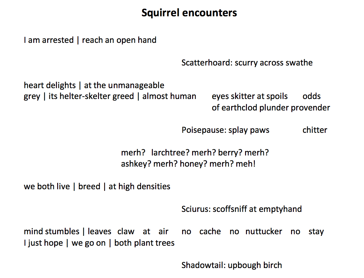 L Kiew – Squirrel Encounters